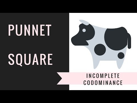 Incomplete Dominance and Codominance Punnett Squares   ( Setting up,Solving)