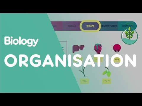 Levels of organisation an organism | Biology for All | FuseSchool