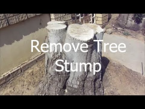 Removing a Tree STUMP in a Confined Space