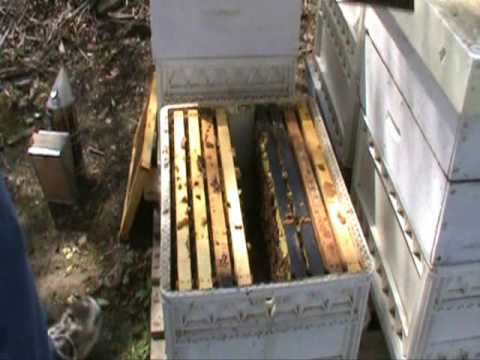 Part 1: Rapid Package Bee Hive Build Up