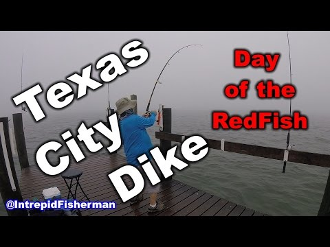 Bull Redfish Texas City Dike - Love these Red Drum even in the fog