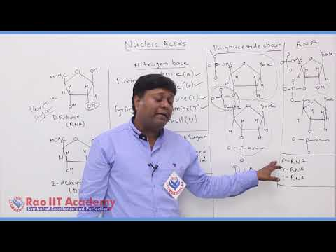 Biomolecules Chemistry Part-6 std 12th HSC Board Video Lecture BY Rao IIT Academy