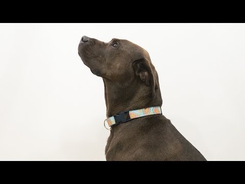 How to Sew a Dog Collar