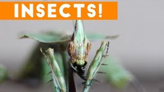Creepiest Insects and Spiders of 2017   Funny Pet Videos