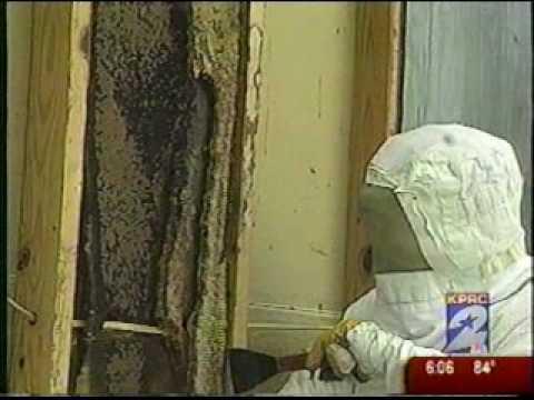 Gotcha Pest Control - Killer Bees Attack Dog