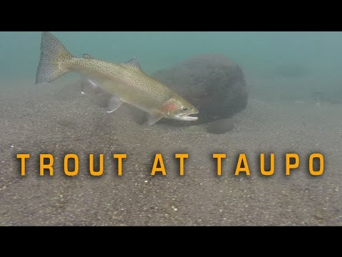 Trout fishing in Taupo, NZ