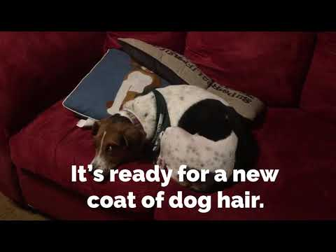 REVIEW: How to get pet hair off your couch with Bissell Pet Hair Eraser Lift-Off Vacuum ((ad))