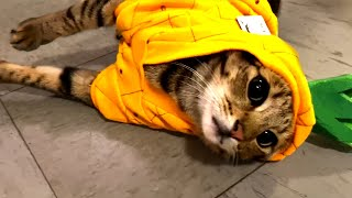 Must Watch Cat Videos! Cute and Funny Cats 🐱
