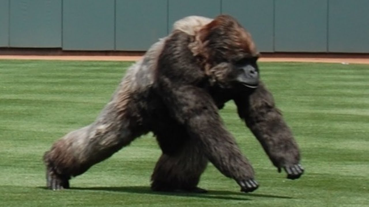 """Craziest """"Animal Interference"""" Moments in Sports History"""