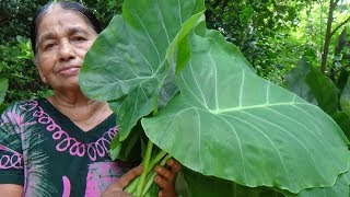 Healthy Foods / Cooking Green Taro Leaves in my Village by my Mom / Village Life