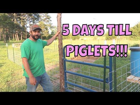 Our Next BIG Adventure...PIGS!!!  Building Our Pig Pen!
