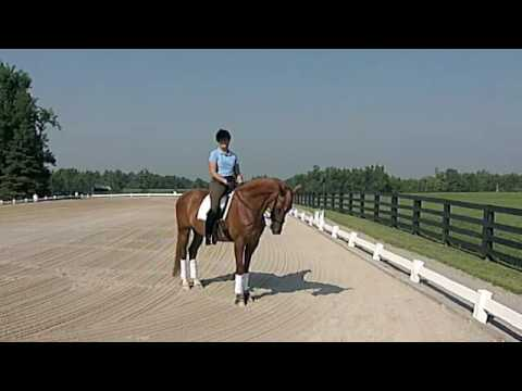 Riding forward - Horse in front of your leg