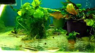 Карантин (передержка) для рыб и растений. Зачем он нужен и как правильно его проводить.