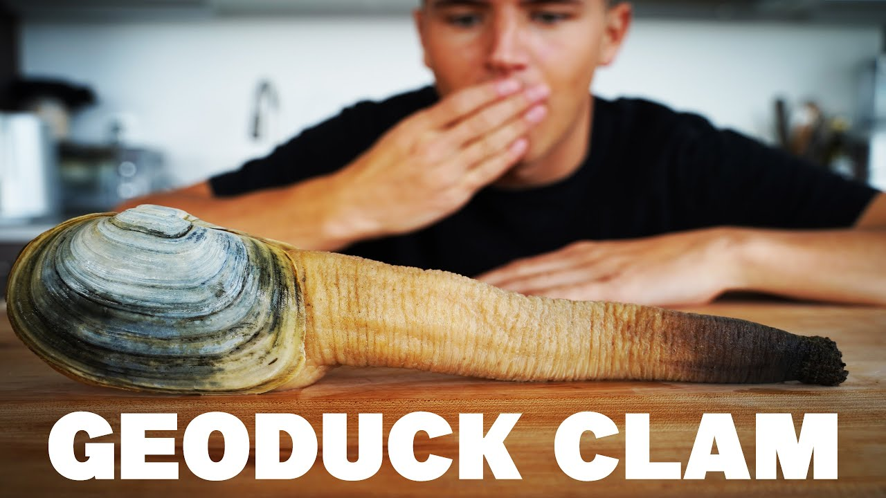 EATING A MASSIVE GEODUCK CLAM