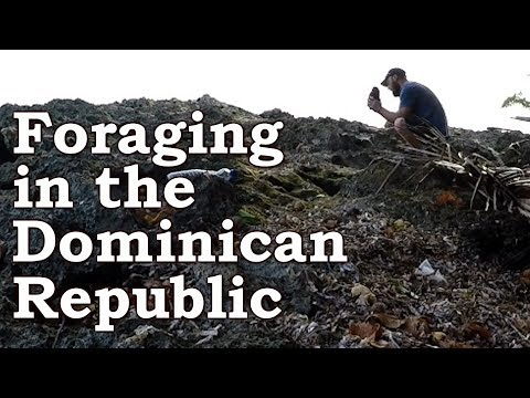Tropical Surival Challenge   Foraging For Wild Edibles   Dominican Republic