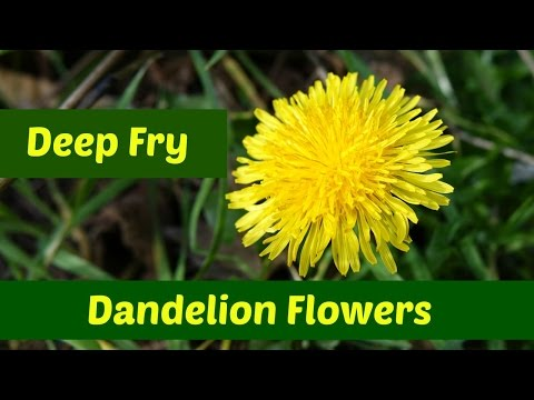 Dandelion Flowers: Three Ways to Deep Fry Dandelion Flowers