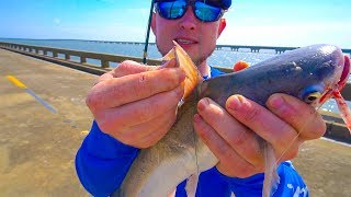 Download The Secret To Relieve A Catfish Sting Video