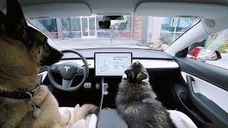 Introducing Dog Mode