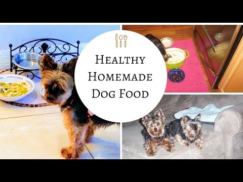How to make Homemade Dog Food - So Easy and So Good for your dogs