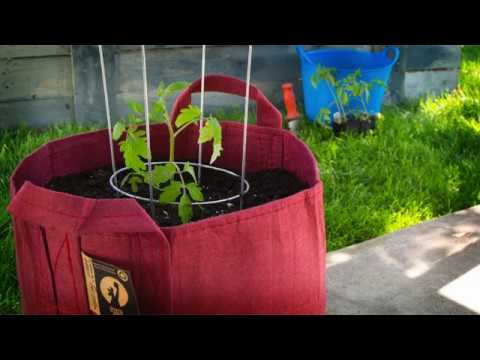 A Better Way To Use A Tomato Cage In A Root Pouch Grow Bag!