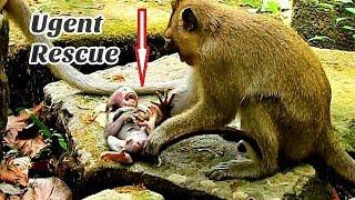 Die Die!!! Baby Daniela need urgently Rescues from Stupid Dee Dee