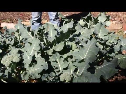 How to Get Rid of Moth Larvae in Vegetable Gardens : Berry Gardening, Fertilizers & Vegetables