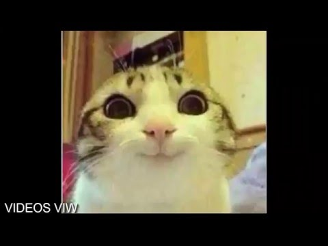 Xxx Mp4 Videos Viw Trailer En Español Ingles Latino HD 3gp Sex