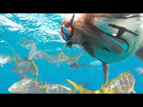 Xxx Mp4 Snorkel Grand Turk With Mango Maddy 3gp Sex