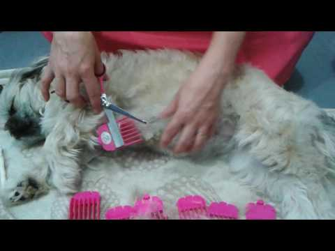 How To Trim Your Long Haired Dog At Home