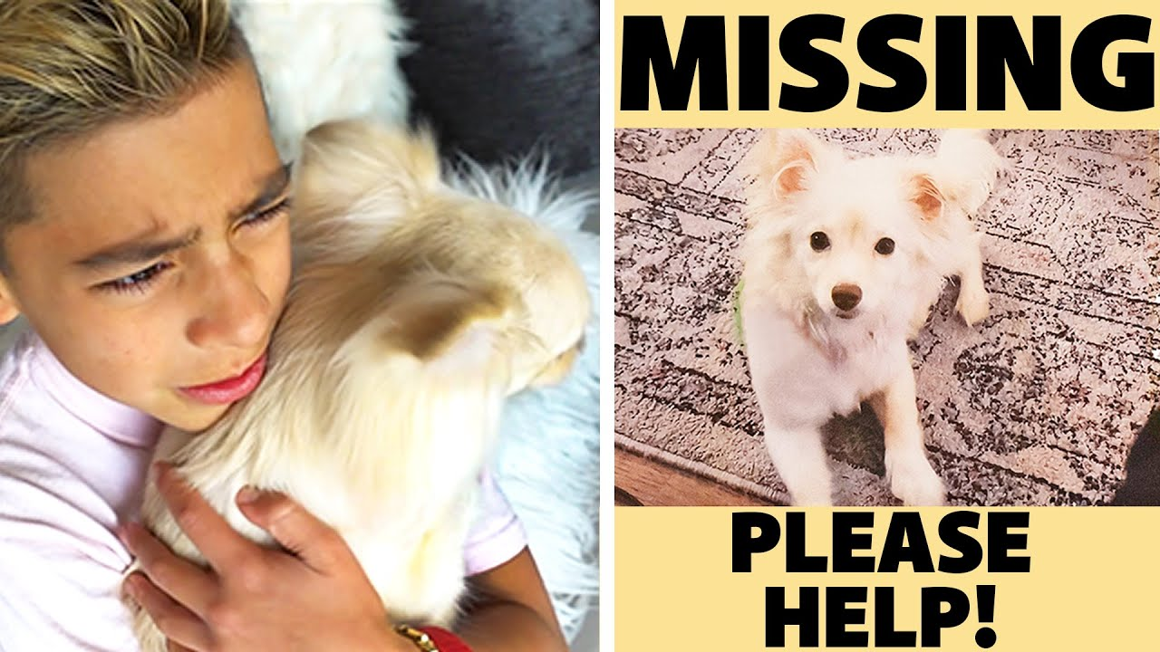 WE FOUND a MISSING PUPPY! **WE CAN'T BELIEVE IT**   The Royalty Family