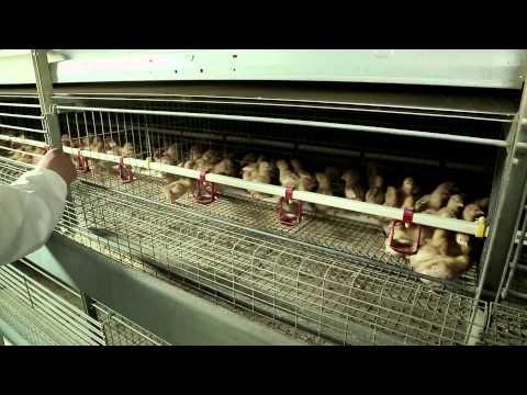VALLI Attrezzature da pollastre
