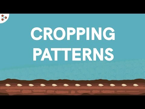 Cropping Patterns - CBSE Class 9