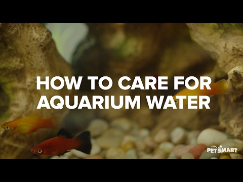 How to Care for Aquarium Water