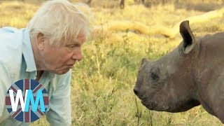 Top 10 David Attenborough Moments