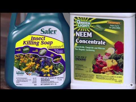 Houseplant insect control|John Dromgoole|Central Texas Gardener