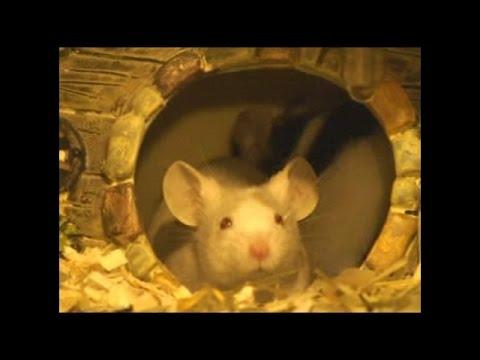 A Cool way to keep Pet Mice