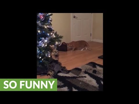 Halloween prop protects Christmas tree from cat
