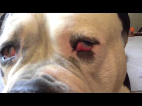Bubbas Eye Infection