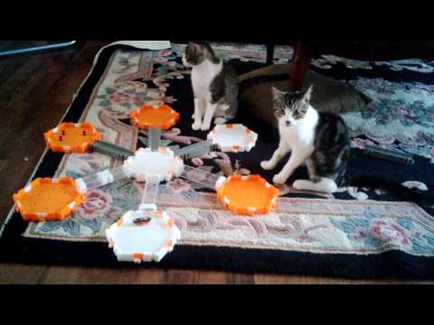 How to keep your cats busy