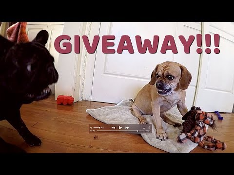 VIVA FREI'S FIRST GIVEAWAY!!! (Thanks Moxy Socks!)