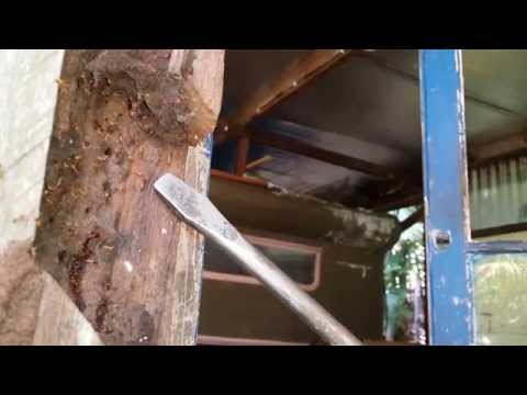 Large termite nest found in house during termite inspection in northern NSW near Byron Bay