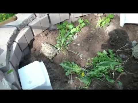 Making Outdoor Tortoise Pen Part 2