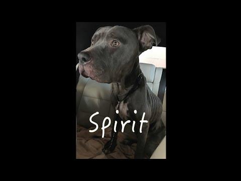 Saving Spirit