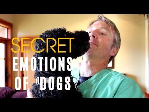 Secret Emotions of Dogs