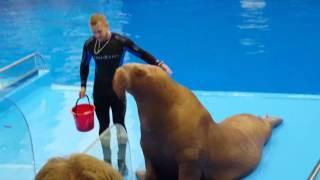 Дельфинарий в океанариум ездили Владивосток