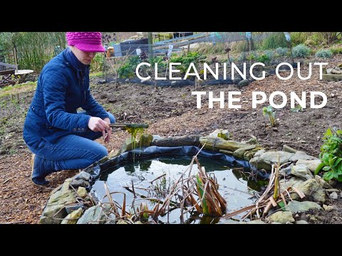 Cleaning the Garden Pond