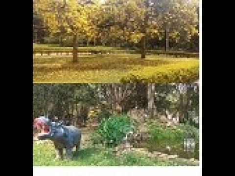 Trip to bangalore cubbon park|vlog cubbon park bangalore|கப்பன் பார்க் பெங்களூர்