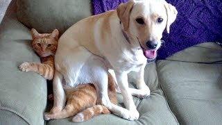 TRY NOT TO ROLL ON THE FLOOR LAUGHING - Funny ANIMAL compilation