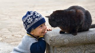 Funny Cats Protecting Babies Compilation