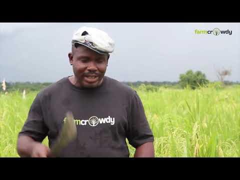 ThankGod Ayekimoyasade Farmer Testimonial - Farmcrowdy in Edo State